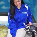 Penguin Encounter In Miami
