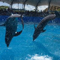 Buying Photos for Your Dolphin Program
