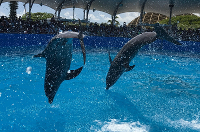 Miami swim with Dolphin Program Costs