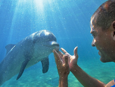 nadar con delfines en miami