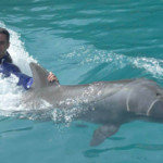 You can Swim with Dolphins Miami Cheaply