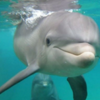 Dolphins in Miami