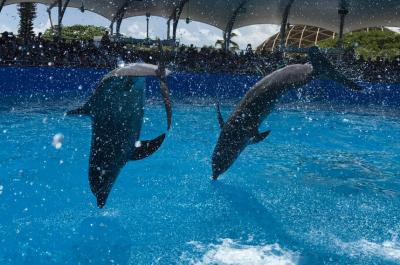 Dolphin World Marco Island